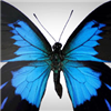 From bumble bees to butterflies, create custom bug stickers and butterfly stickers!  Browse through a wide selection of insect decals, ladybugs, dragonflies, butterfly stickers, or you can upload your own. A great way to decorate your kids' room, birthday parties, notebooks and more!  Have fun with insect and butterfly stickers from StickerYou!
